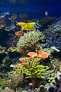 Vancouver Aquarium fish and coral. Address: 845 Avison Way, Vancouver, British Columbia, V6G 3E2, CANADA.