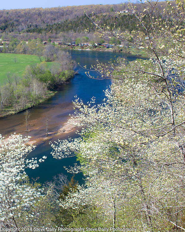 "Springtime in the Ozarks is dogwood time, with the blossoms forming ""clouds"" through the forest"