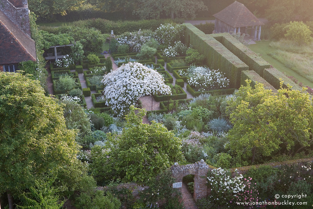 Overhead view of Rosa mulliganii in full flower in the White Garden at Sissinghurst Castle