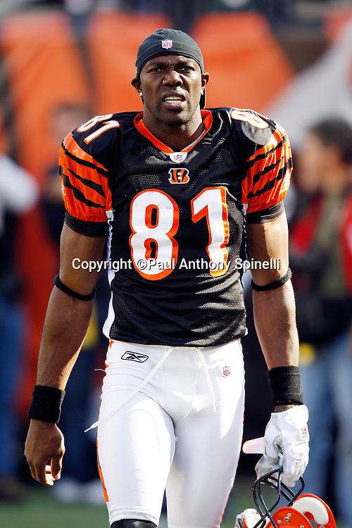 Cincinnati Bengals wide receiver Terrell Owens (81) looks on during the NFL week 8 football game against the Miami Dolphins on Sunday, October 31, 2010 in Cincinnati, Ohio. The Dolphins won the game 22-14. (©Paul Anthony Spinelli)