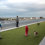 WASHINGTON, DC - OCT07: Twin brothers Greg and Dennis Lacot (L-R), play with their Italian greyhound dogs Gemma and Giada, also siblings, at the rooftop dog park at City Market at O Street apartments where the brothers share an apartment, October 7, 2016, in Washington, DC. As new apartment buildings continue sprouting around downtown DC, developers know that a large percentage of renters in the city have dogs and make their choices of buildings based largely on pet-friendliness. So they go out of their way to be welcoming to dogs.  (Photo by Evelyn Hockstein/For The Washington Post)