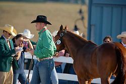 Gallingan Oliver James (IRL) - Whizardre N Starlite<br /> Alltech FEI World Equestrian Games <br /> Lexington - Kentucky 2010<br /> © Dirk Caremans