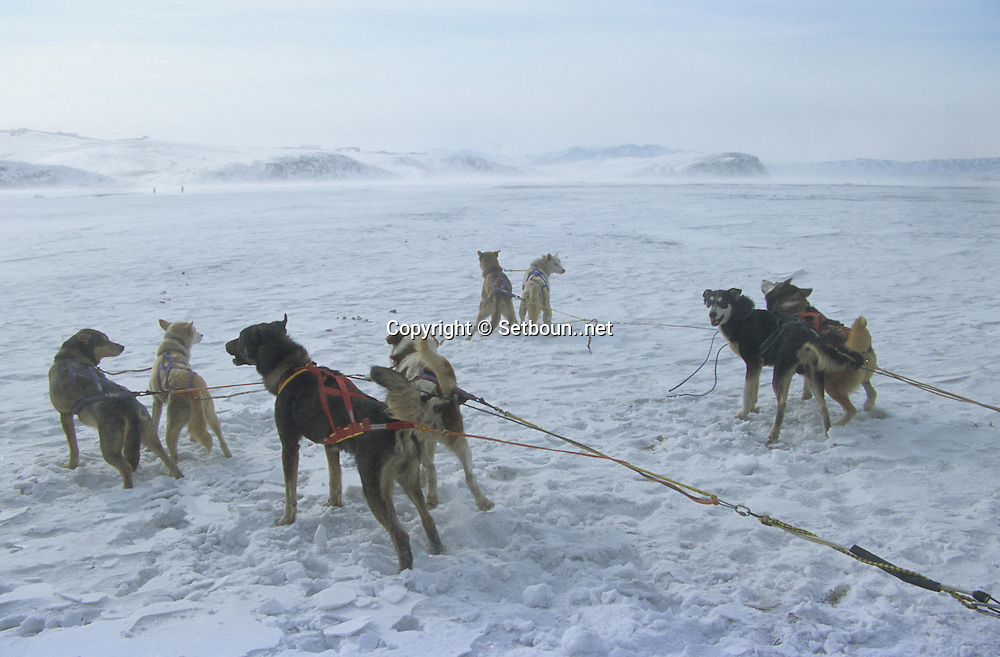 Mongolia. , sledge dog race on the frozen river  neau Ulaanbaatar, the river Tul, musheer joel rauzy