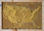 "Artist works with Bees To Create Beautiful maps of the the world using bees wax<br /> <br /> Ren Ri cooperated with bees to create art works"" Yuansu series"". Yuansu . Yuansu II, which is built on acrylic boxes, is the art work made when cooperating with bees.<br /> <br /> Ren Ri  said ""I change the gravity direction of the honeycomb every seven days by rotating the box. In the whole Yuansu series, I try to eliminate the absolute domination of the artist. Bees cooperating with artist can be seen as a relationship between human and nature'<br /> <br /> Photo shows: Map of USA<br /> ©Ren Ri/Exclusivepix Media"