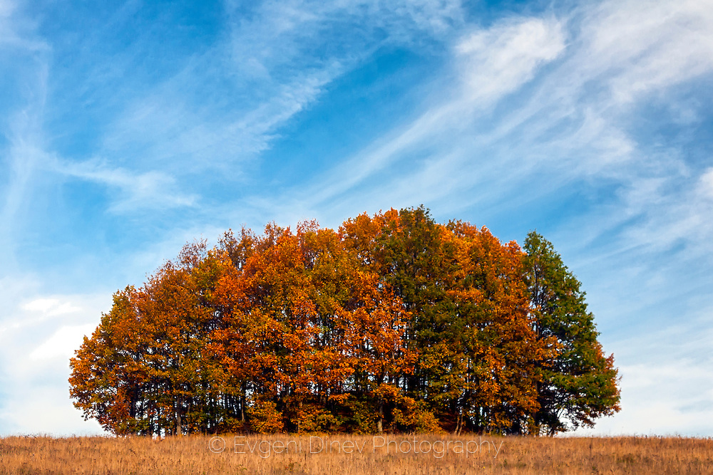 Compact small autumn deciduous forest