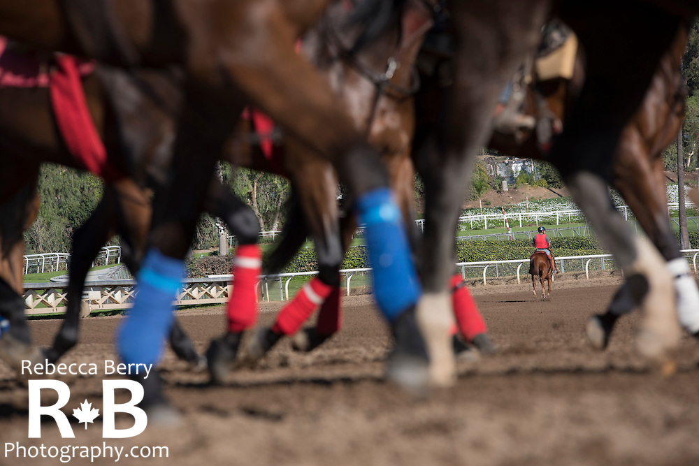 Lots of legs at Santa Anita Feb 21, 2016