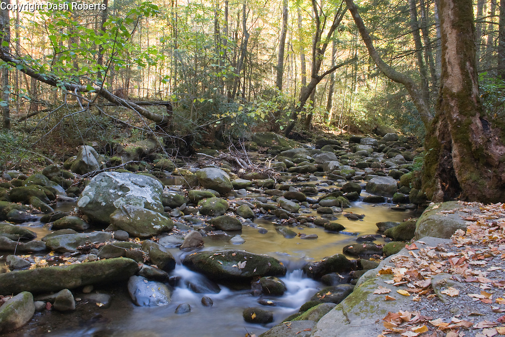 Peaceful brook in the Smoky Mountains.
