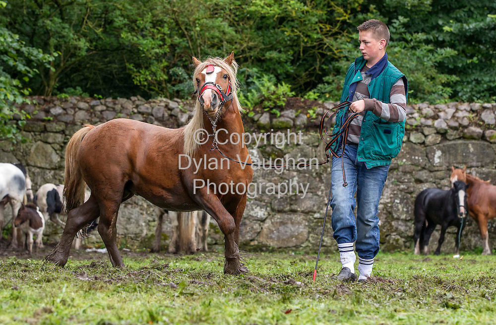 15/7/2012.Tommy Donohoe from Galway pictured at the Borris Horse Fair in County Carlow yesterday...Picture Dylan Vaughan