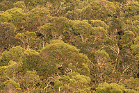 Valley Bushveld and dense trees, Addo Elephant National Park, Eastern Cape, South Africa