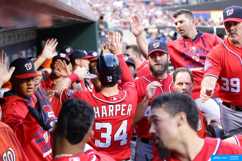 Bryce Harper, Washington Nationals, is congratulated in the dugout after scoring a run in the first inning during the New York Mets Vs Washington Nationals. MLB regular season baseball game at Citi Field, Queens, New York. USA. 1st August 2015. (Tim Clayton for New York Daily News)