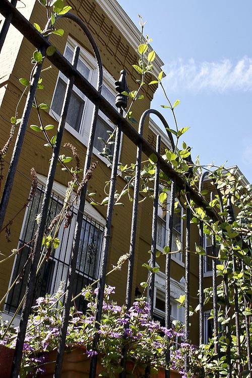 A Capitol Hill row house on a sunny day.
