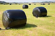 Black bags of hay in field, Shottisham, Suffolk, England