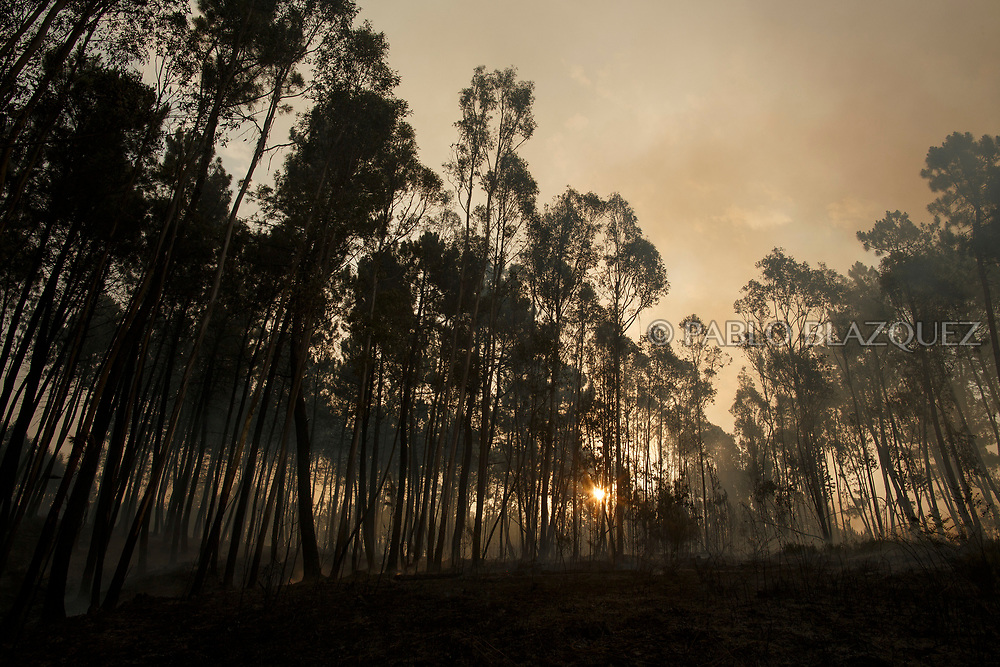 LEIRIA, PORTUGAL - JUNE 19:  The sun rises behind burned trees after a wildfire took dozens of lives on June 19, 2017 near Castanheira de Pera, in Leiria district, Portugal. On Saturday night, a forest fire became uncontrollable in the Leiria district, killing at least 62 people and leaving many injured. Some of the victims died inside their cars as they tried to flee the area.  (Photo by Pablo Blazquez Dominguez/Getty Images)