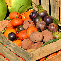 Mixed Vegetables at El Mercado Farmers' Market in Antigua, Guatemala<br /> Fifty percent of Guatemalans work in agriculture. They primarily grow coffee followed by bananas for export. The local farmers also grow fresh fruit and vegetables to generate income at local markets such as El Mercado, the main farmers' market in Antigua. The wooden box holds varieties of sapote fruit. They are native to Central America and Mexico. Inside is an orange flesh surrounding a large seed. Behind them are watermelons. Guatemala is among the largest exporters of melons in the world.