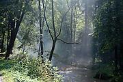 Morgennebel am Fluss, Kirnitzschtal, Bad Schandau, Sächsische Schweiz, Sachsen, Deutschland | mornig fog at river, Kirnitzsch valley,  Bad Schandau, Saxon Switzerland, Saxony, Germany