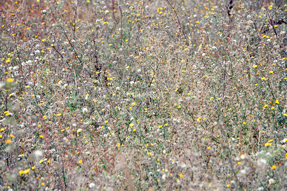 field with various wild grasses and flowers