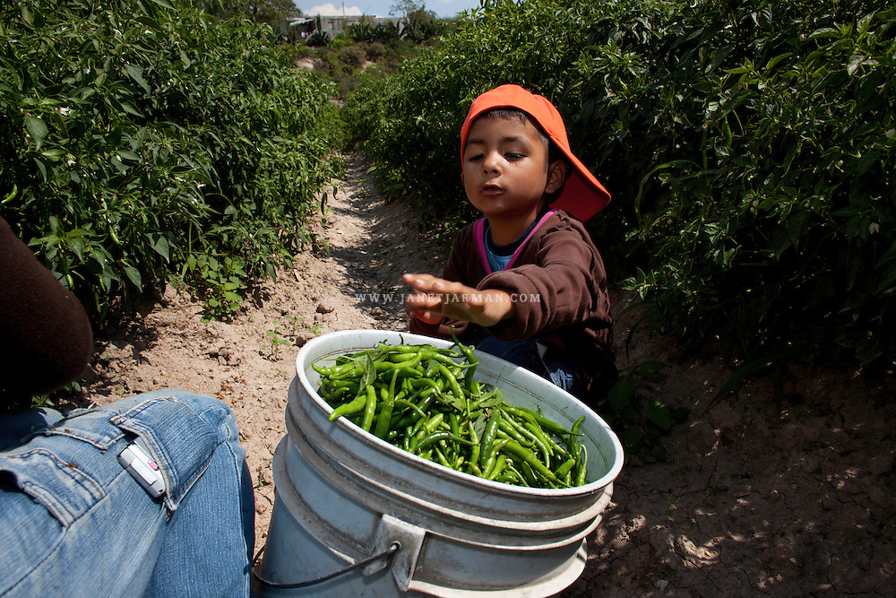 Hidalgo, Mexico, 2011 – Carlos joins his grandparents and 20 other villagers as they harvest chili. He adores his grandfather and feels ecstatic about his summer adventures in the Mexican countryside where they live. He told his teachers in the United States that he plans to move to Mexico permanently. The teachers promptly called Marisol to schedule a meeting to discuss these issues.