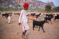 Inde, Rajasthan, village de Meda dans les environs de Jodhpur, population Rabari, berger // India, Rajasthan, Meda village around Jodhpur, Rabari ethnic group, shepherd