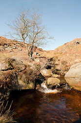 Highshaw Clough close to Cutthroat Bridge in the peak district ..http://www.pauldaviddrabble.co.uk.11 March 2012 .Image © Paul David Drabble