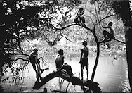Boys climb trees to eventually jump into the Siem Reap River, one of the rivers which feeds into Tonle Sap during the annual water festival, Cambodia.