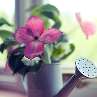 A small watering can of flowers sitting on a window sil