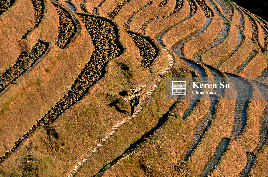Farmer walks along the narrow path in the mountain of terraced rice paddies, Longsheng, Guangxi Province, China