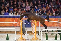 105 - G Zarah <br /> KWPN Stallion Selection - 's Hertogenbosch 2014<br /> © Dirk Caremans