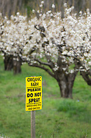 Sign posted in Pear orchard in bloom, Hood River Oregon