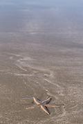 A starfish on Kiawah Beachwalker Park on Kiawah Island, SC.