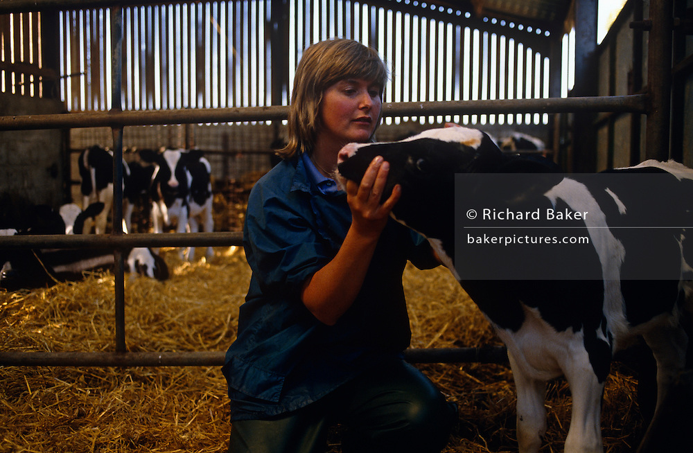 On soft straw of a farm barn lady vet Diana Stapleton checks a young Fresian heifer cow at Manor House Farm, Barnoldswick near Settle, North Yorkshire, England.