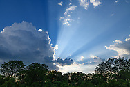 Sunbeams emerge from beyond storm clouds, with mixed forest, Khwai Game Reserve, © 2019 David A. Ponton