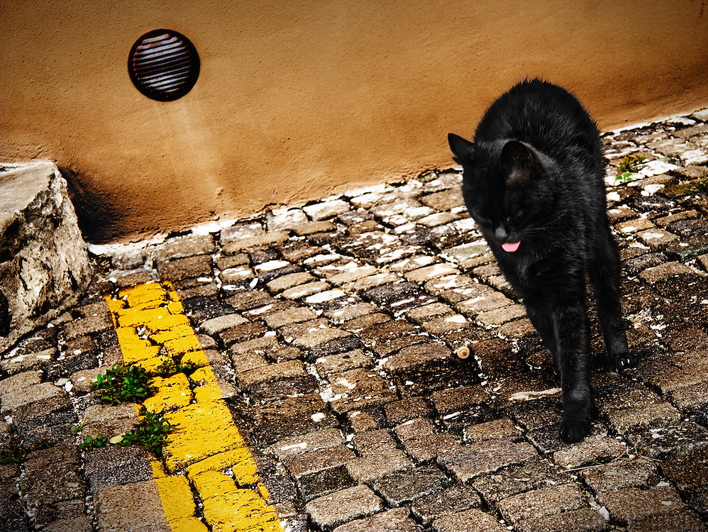 A black cat stretching and expressing it's displeasure on a street in the city of Gorizia, Italy.<br />