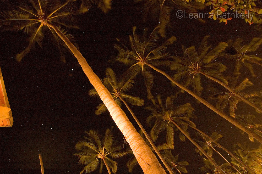 Sayulita, Mexico - palm trees reflect the light of the house lamp in the starry night