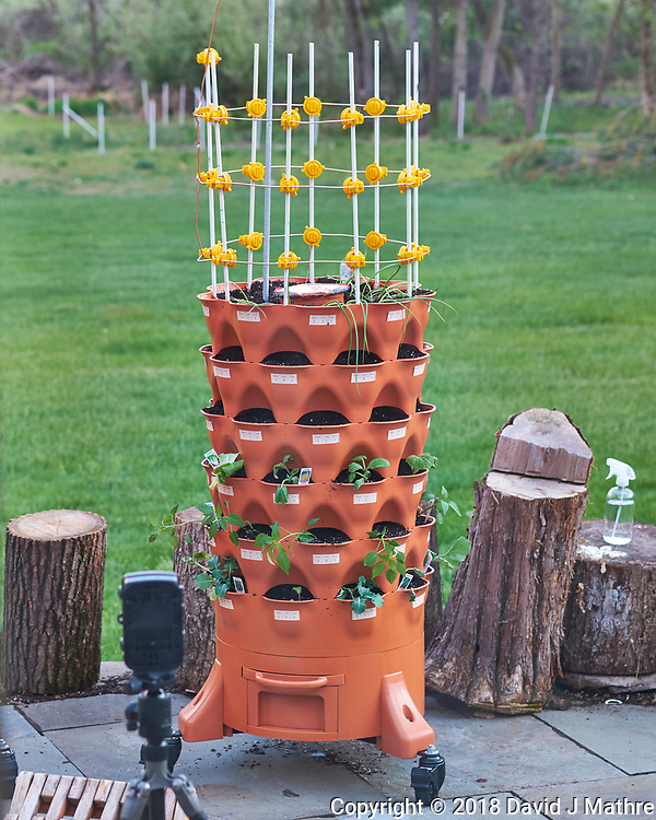 Garden Tower with Purchased Seedlings. Image taken with a Fuji X-H1 camera and 60 mm f/2.4 macro lens