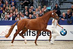 471, Kandour<br /> KWPN Stallionshow - 's Hertogenbosch 2018<br /> © Hippo Foto - Dirk Caremans<br /> 02/02/2018