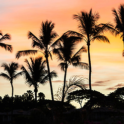 Maui Hawaii Wailea Makena palm trees sunrise panorama with colorful orange and blue colors. Panoramnic photo ratio is 1:3. Copyright ⓒ 2019 Paul Velgos with All Rights Reserved.
