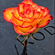 On the 15th anniversary of 9-11 at Ground Zero, single rose placed on the memorial plagues  by a loved ones by the name of a family member who died that day.<br /> <br /> The 2,983 names of the victims of the attacks of Sept. 11, 2001, and Feb. 26, 1993, World Trade Center truck bombing are inscribed into bronze parapets surrounding the twin memorial pools.