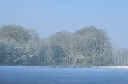 Trompenburgh Winter, koud, cold