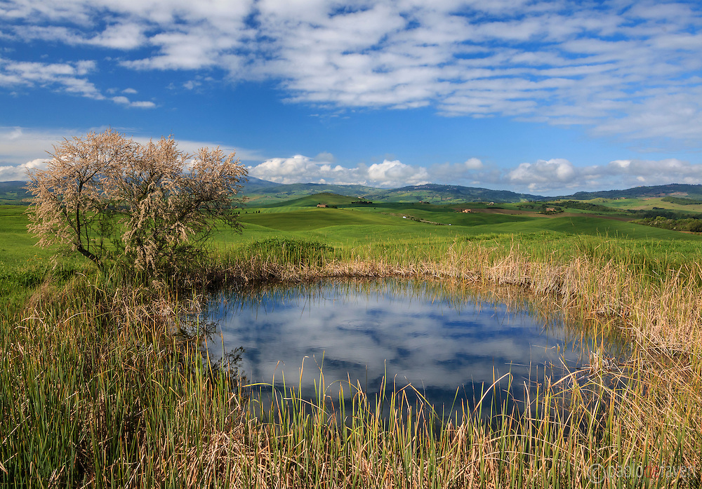 A small pond encircled by beautiful yellow grasses and the cloudy sky reflected in the water, a typical  view of the hills of the small hamlet of Terrapille between Pienza and Montalcino in Valdorcia, Tuscany, Italy