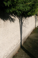 Tree shadow against wall with overhanging evergreen tree