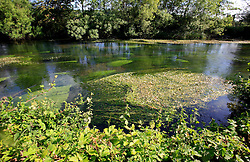 UK ENGLAND WILTSHIRE 26JUN08 - River weeds in the river Kennet near Stichcoombe in rural Wiltshire, western England...jre/Photo by Jiri Rezac / WWF UK..© Jiri Rezac 2008..Contact: +44 (0) 7050 110 417.Mobile:  +44 (0) 7801 337 683.Office:  +44 (0) 20 8968 9635..Email:   jiri@jirirezac.com.Web:     www.jirirezac.com..© All images Jiri Rezac 2008 - All rights reserved.