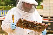 Chuck Sowers inspects the bees.