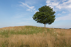 field of wildflowers and a tree in The Hamptons
