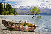 The famous willow tree at Lake Wanaka has a guest...a rustic red boat.