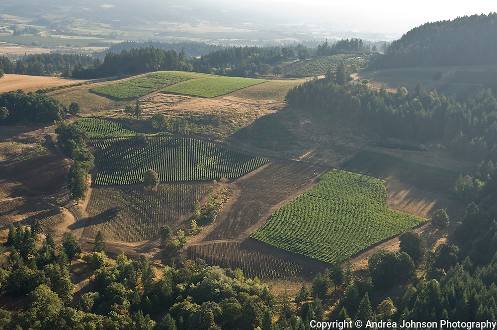 Aerial view over Alexana vineyards, Dundee Hills, Willamette Valley, Oregon