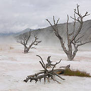 Dead Ghost Trees - Mammoth Terrace Hot Springs - Yellowstone National Park