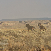 """BENJAMIN'S PORTFOLIO<br /> <br /> <br /> © Equus ferus- Wild Horse Photography 2015 <br /> <br /> **To purchase, click the little shopping cart above and it will take you to the print ordering page. All sizes and print types are available. If you don't see the size or type of print- send us an email and we will make it happen (Click the """"i"""" above to contact us)."""