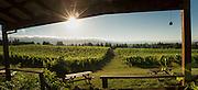 Brick house biodynamic winery, Ribbon Ridge AVA, Willamette Valley, Oregon