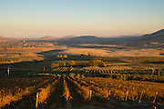 Olson Vineyard with Red Mt. in background, Yakima, Washington