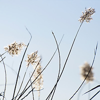 In a late afternoon of February some weeds by the Douro river are lit by soft winter light.